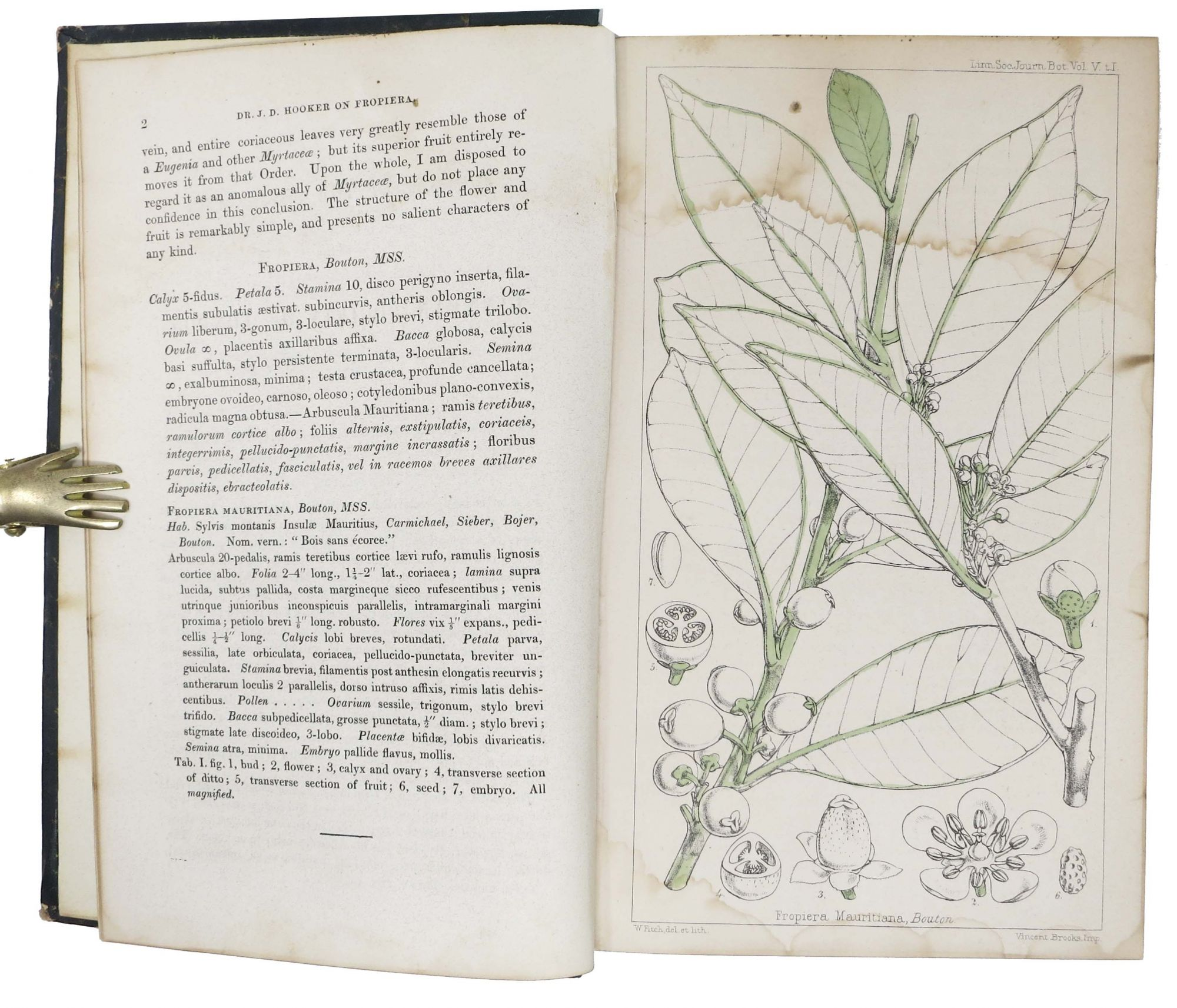 JOURNAL Of The PROCEEDINGS Of The LINNEAN SOCIETY  BOTANY  Vol  V