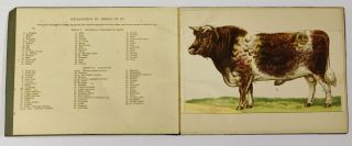 BAILLIÈRE'S POPULAR ATLAS - MODEL Of The OX.; Showing 390 Anatomical Structures on Superposed Coloured Plates with Key