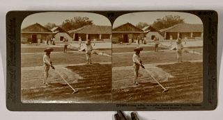 DRYING COFFEE, on a Coffee Plantation near Cordoba, Mexico. (77) 6375; 77 S407. Stereoview...